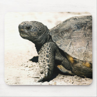 Gopher-Schildkröten-Kunst