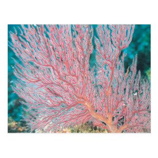 Gorgonian Koralle 3 Postkarte