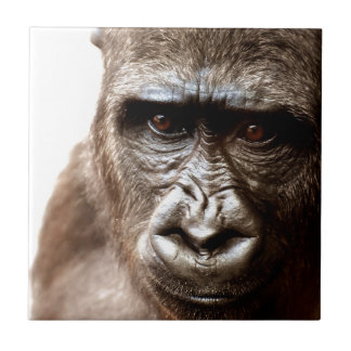 Gorilla Keramikfliese