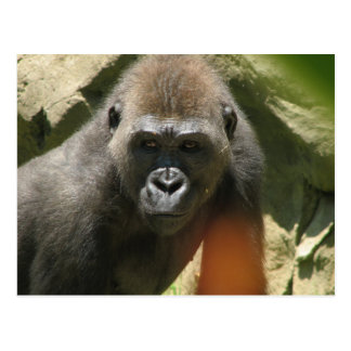 Gorilla-Postkarte Postkarte