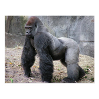 Gorilla Postkarten