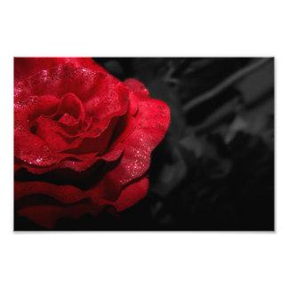 Gotische Rose Photodrucke