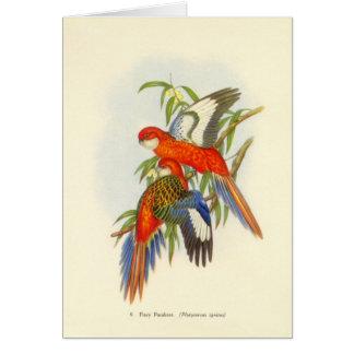 Gould - brennende Parakeet-Karte