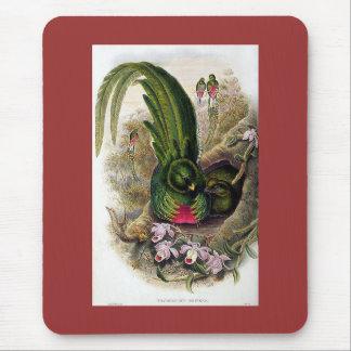 Gould - Quetzal Mousepad