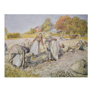 Grabende Potatoes, 1905 Postkarte