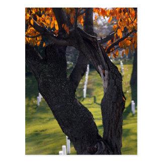 Gräber durch die Bäume Postkarte