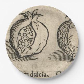 Granatapfel Pappteller