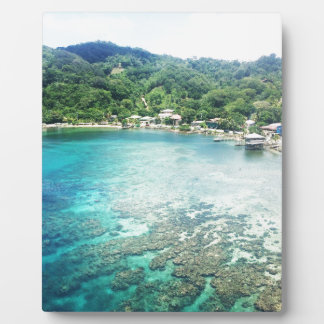 Grand Cayman Korallenriff Fotoplatte