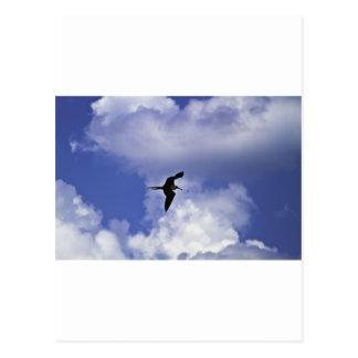 Grand Cayman Vogel Postkarte