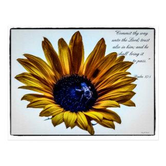 Grannyssonnenblume Postkarten