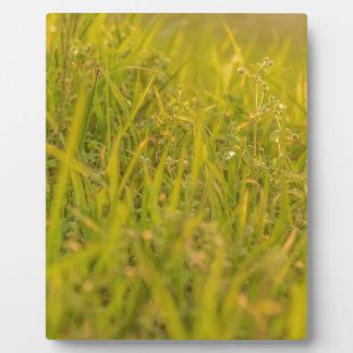 Gras-Detail-Foto Fotoplatte