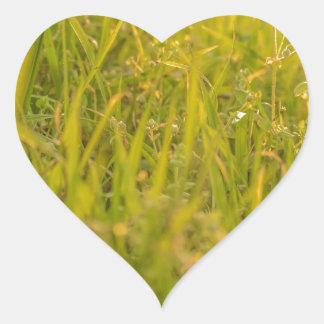 Gras-Detail-Foto Herz-Aufkleber