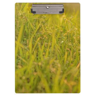 Gras-Detail-Foto Klemmbrett
