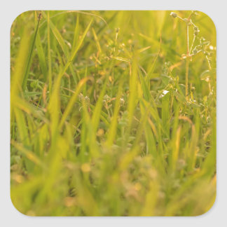 Gras-Detail-Foto Quadratischer Aufkleber