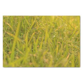 Gras-Detail-Foto Seidenpapier