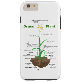 Gras Graminoids Pflanzen-Diagramm Tough iPhone 6 Plus Hülle