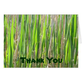 Gras-Rock danken Ihnen Karten