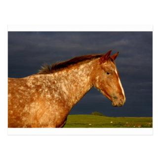 Grasland-Pferd Postkarte