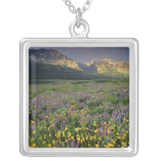 Grasland-Wildblumen-Füllewiese nahe See Versilberte Kette