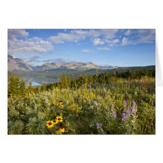 Grasland-Wildblumen und senken den zwei Medicine Karte
