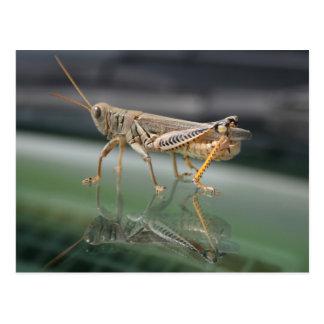 Grasshopperly Reflexions-Postkarte Postkarte