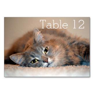 katzen tischkarten designs. Black Bedroom Furniture Sets. Home Design Ideas