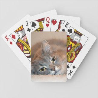 Grau, TAN, weiße langhaarige Katze durch Shirley Spielkarten