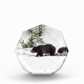 Graubären im Schnee Auszeichnung