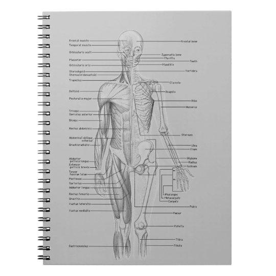 Graue Anatomie Spiral Notizblock | Zazzle