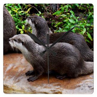 Graue hungrige Otter, quadratische Wanduhr