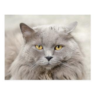 Graue Katze mit grünen Augen Postkarte