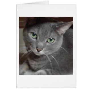 Graue Katzen-russisches Blau Karte