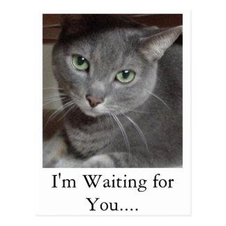 Graue Katzen-russisches Blau Postkarte