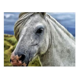 Graue Pferdepostkarte Postkarte