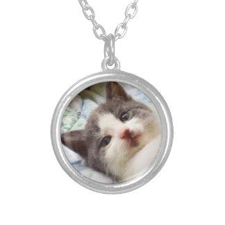 Graue u. weiße Kätzchen-Halskette Versilberte Kette
