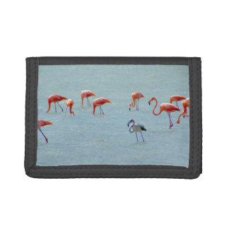 Graue und rosa Flamingomenge im See