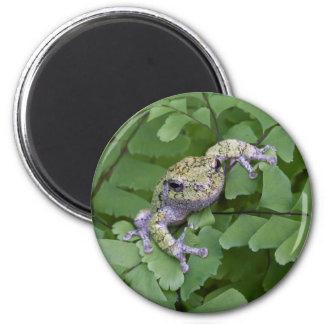 Grauer Baumfrosch auf Farn, Kanada Runder Magnet 5,7 Cm