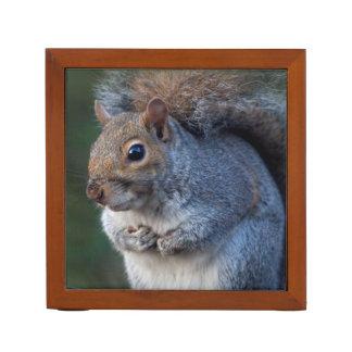Grauer Eichhörnchen-Schreibtisch-Organisator Stifthalter
