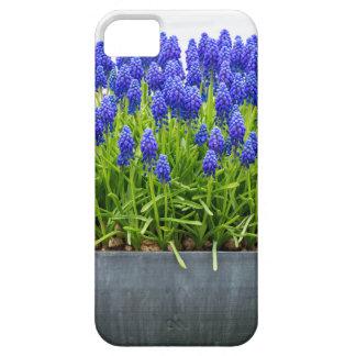 Grauer MetallBlumenkasten mit blauen Etui Fürs iPhone 5