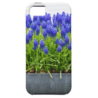 Grauer MetallBlumenkasten mit blauen iPhone 5 Hülle