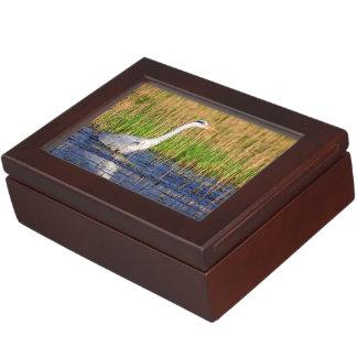 Grauer Reiher, Ardea cinerea, in einem Teich Erinnerungsdose