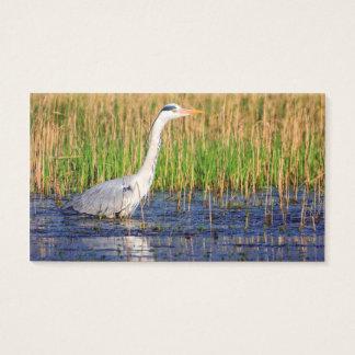 Grauer Reiher, Ardea cinerea, in einem Teich Visitenkarte