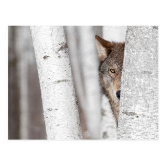 Grauer Wolf (Canis Lupus) hinter Baum Postkarte