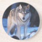 grauer Wolf, Canis Lupus, in den Vorbergen der 3 Sandstein Untersetzer