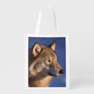 grauer Wolf, Canis Lupus, in den Vorbergen von 2 Wiederverwendbare Tragetaschen