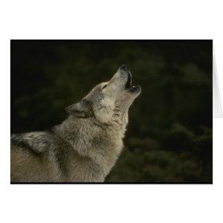 Grauer Wolf Grußkarte