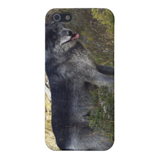 Grauer Wolf iPhone Fall iPhone 5 Case