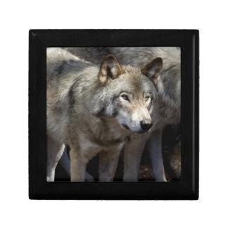 Grauer Wolf stehend Erinnerungskiste