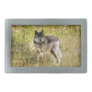 Grauer Wolf-u. Wildnis-Foto-Geschenk Rechteckige Gürtelschnallen