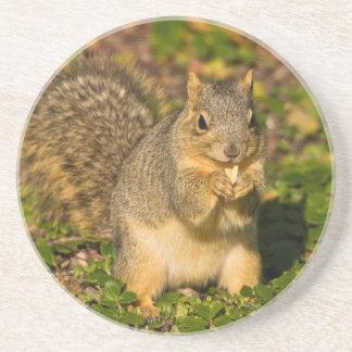 Graues Eichhörnchen, essend, Erdnuss, Crystal Getränkeuntersetzer